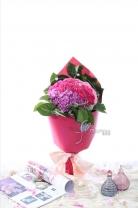 60支康乃馨 + 蕾絲花  +襯葉